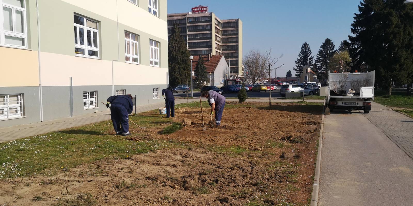 Djelatnici Komunalca ove godine posadili 93 stabla