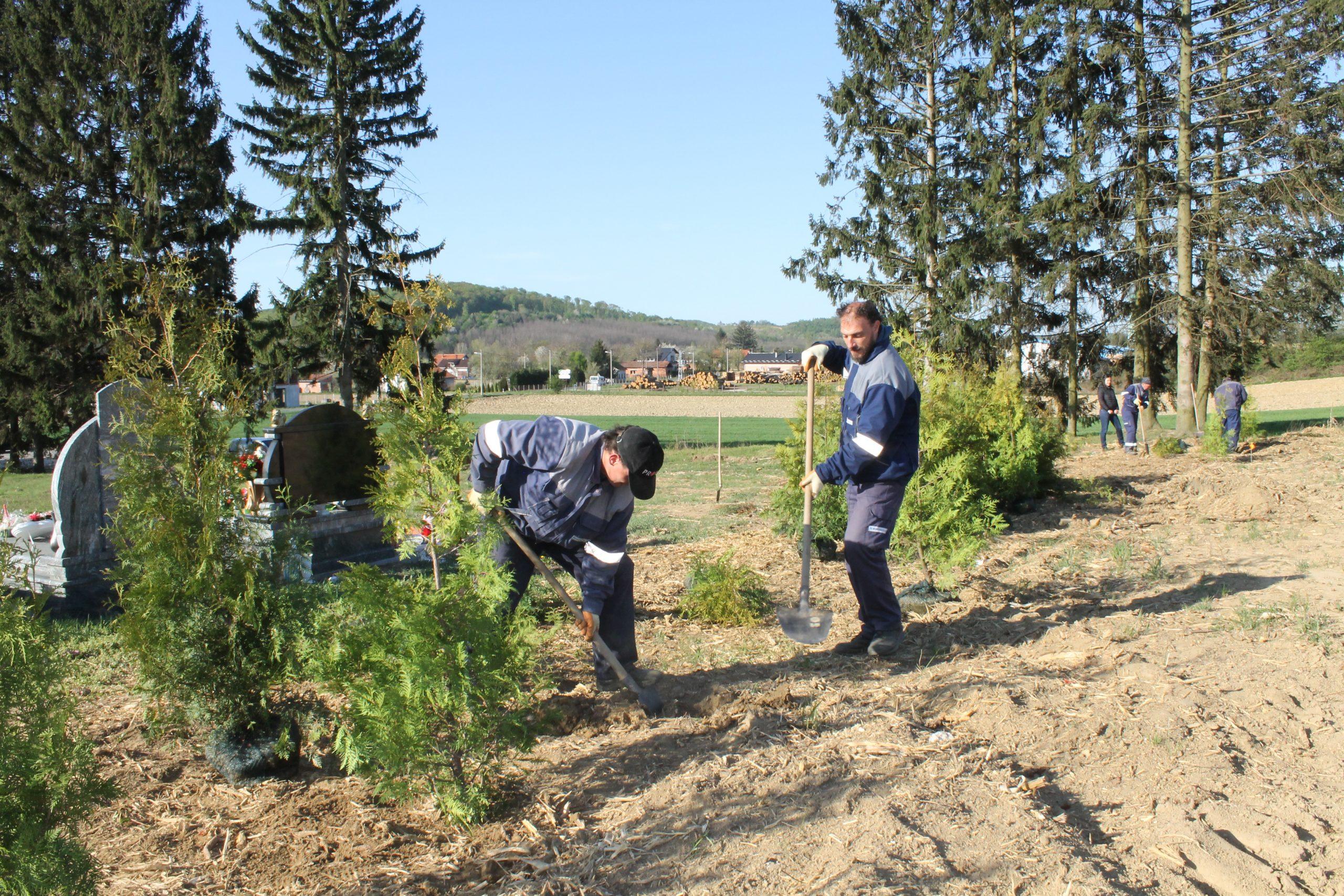 Na groblju u Reki posađeno 80 tuja