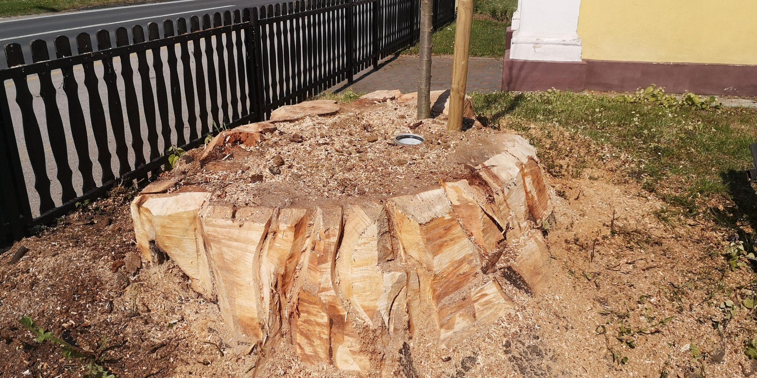 Novo stablo lipe posađeno kod kapelice na Varaždinskoj cesti