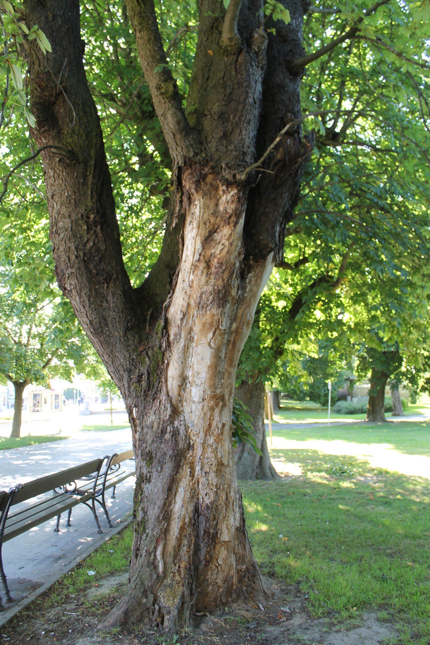 U Gradskom parku u tijeku je uklanjanje osušenih stabala i sadnja novih