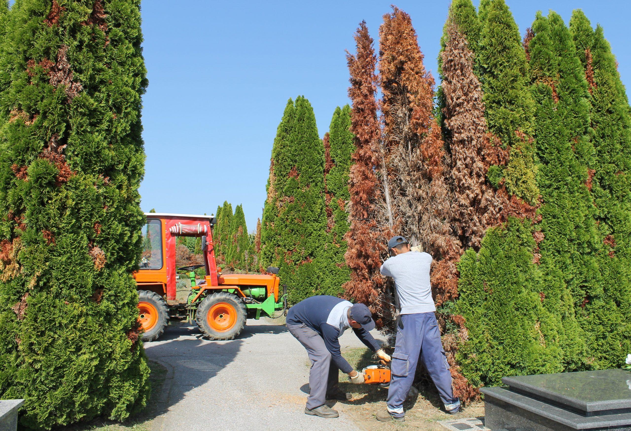 Na Gradskom groblju Pri Svetom Duhu u tijeku je revitalizacija zelenila