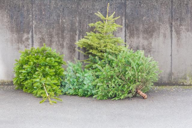 Obavijest o odvozu božićnih drvaca na području grada Koprivnice