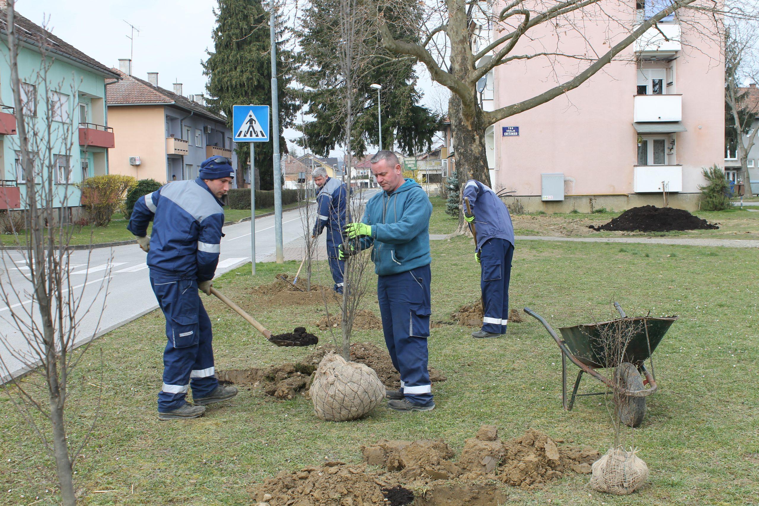 Počela sadnja stabala i ukrasnog grmlja na Trgu kralja Krešimira