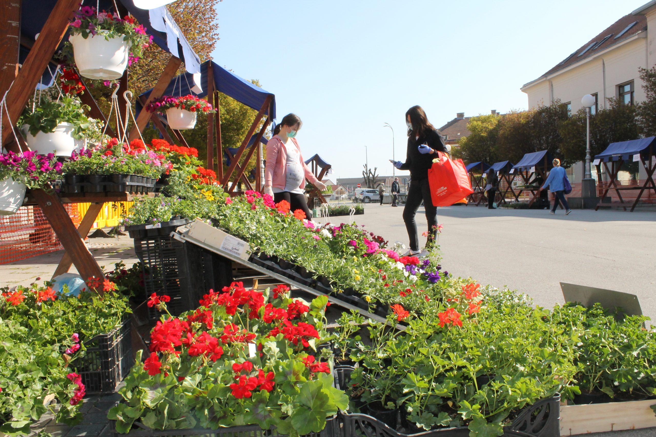 Cvijeće i presadnice i ovog proljeća nabavite u centru grada
