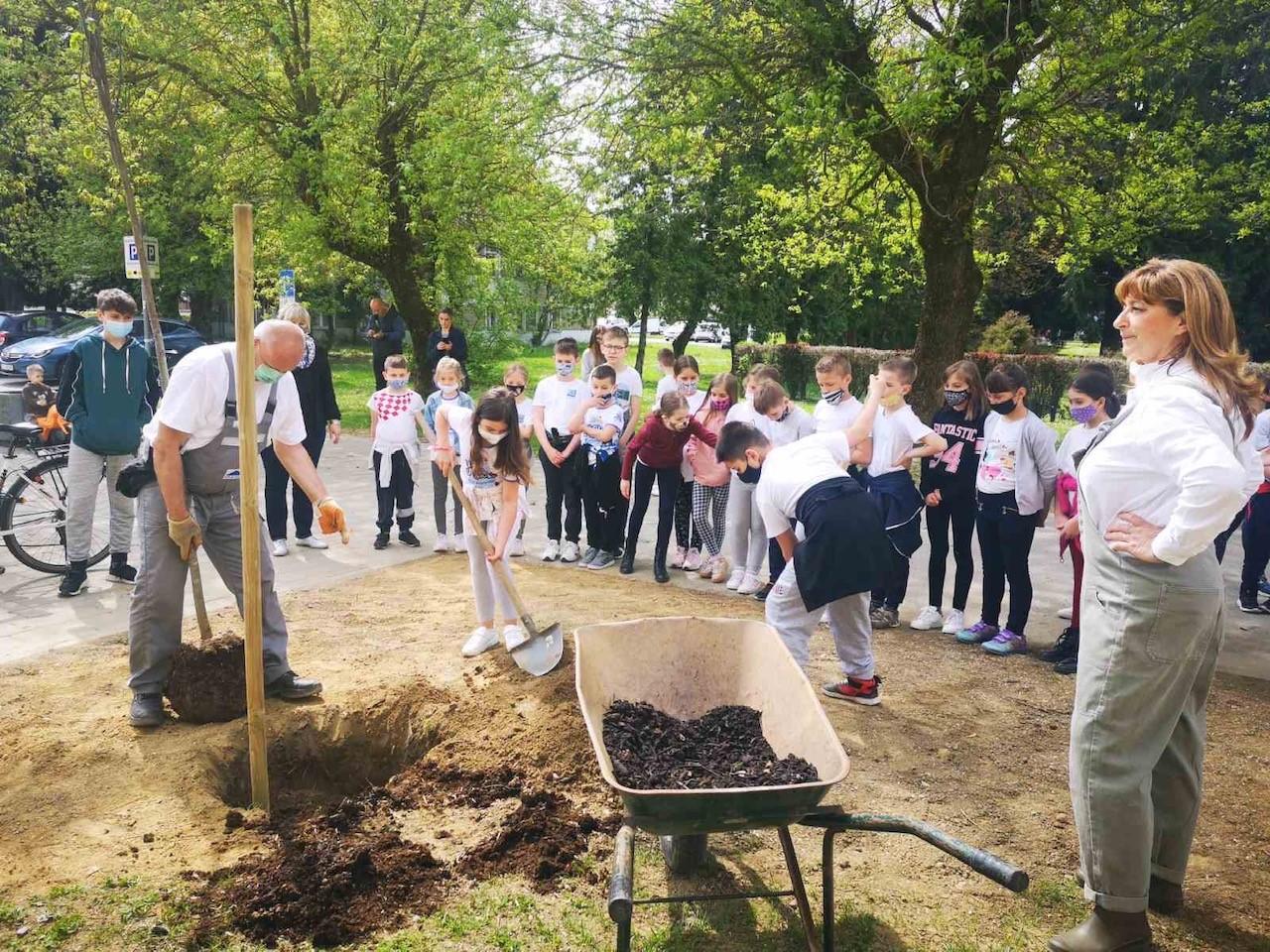 Nova stabla krasit će okoliš škole A.N.Gostovinski