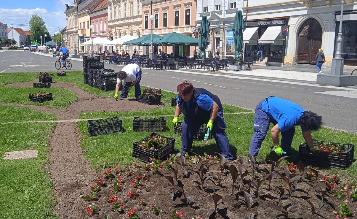 Ljetno cvijeće na gradskim gredicama